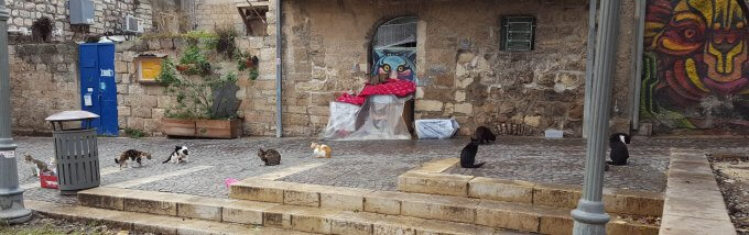 12 street cats in Jerusalem