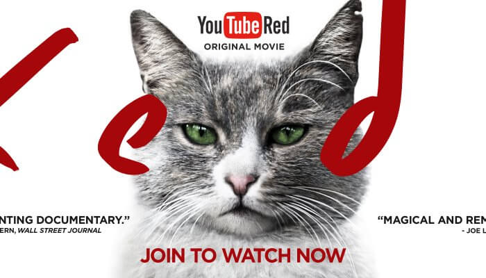 Kedi -- YouTube Red
